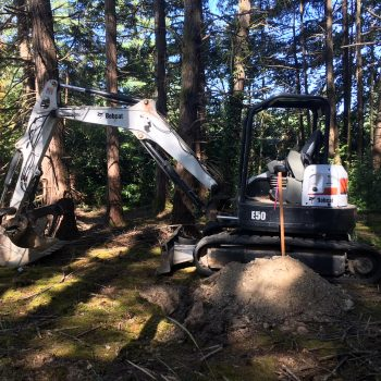 BobCat Bulldozer in Forest